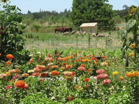 Soil Born Farm
